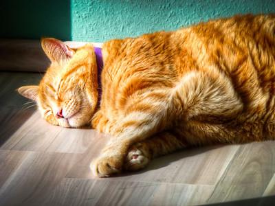 orange tabby cat sleeping in sun