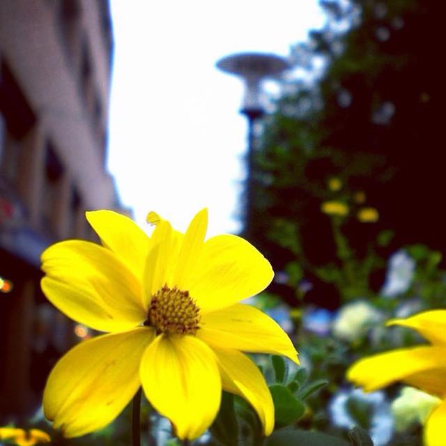 flower boras sweden