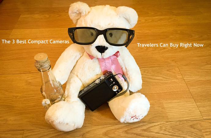 traveling camera bear