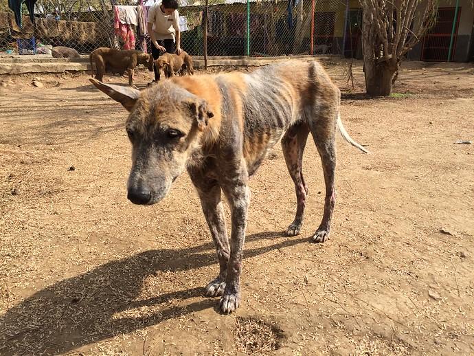 udaipur animal aid
